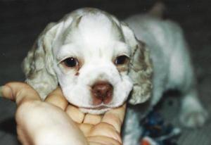 Barbie puppy Oct 2000 comp